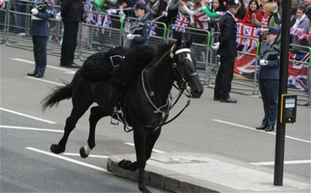 royal wedding runaway horse